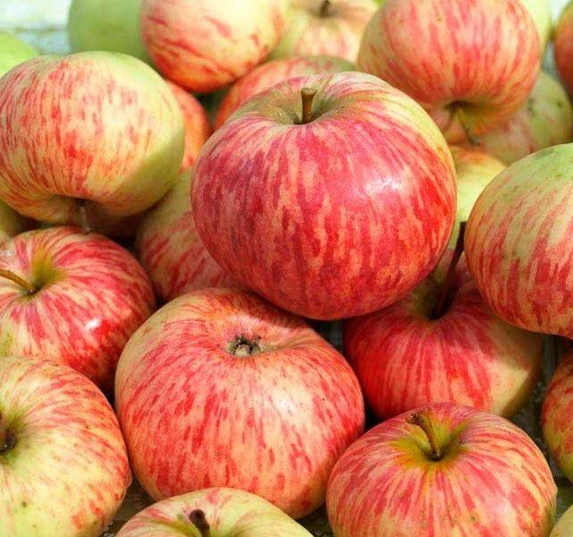 Яблоня Коричное полосатое